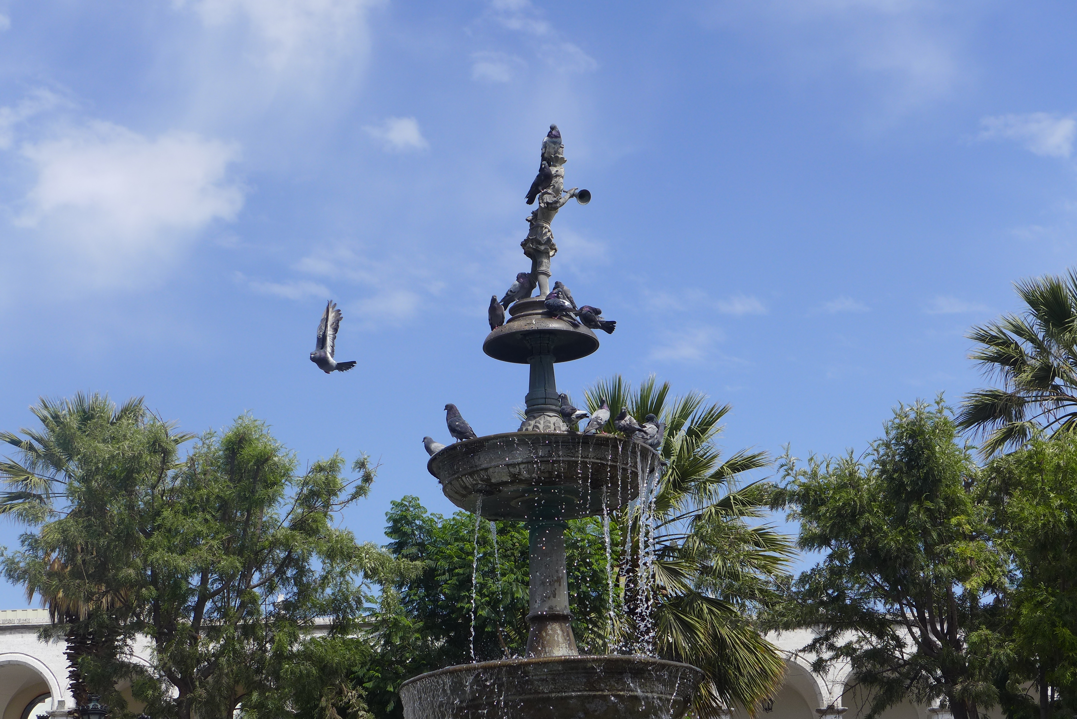 Bubbling fountain and a pigeon in flight